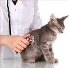Ветеринарные клиники в Старосубхангулово